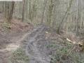 2014-03-17-dachsberg-baumfaellungen-163