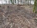 2014-03-17-dachsberg-baumfaellungen-167