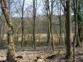 2009-april-04-filmaufnahmen-bilderbuch-grunewald_55-klein