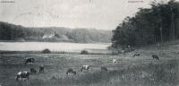 1903-01-03-grunewaldsee-kuehe-klein-a
