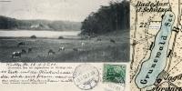 1903-01-03-grunewaldsee-kuehe-klein