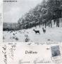 1901-rehe-im-grunewald