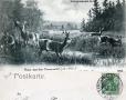 1905-rehe-im-grunewald