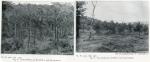 1906-hundekehlefenn-1907-der-grunewald-bei-berlin-dahl-klein