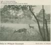 1932-schmook-wildpark-grunewald-2