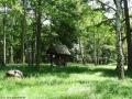 2012-06-17-206-hundekehle-klein