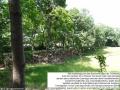 2012-06-17-210-hundekehle-klein