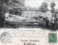 1900-12-25-hundekehle-foersterei-klein