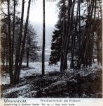 1911-ca-waldlandschaft-pechsee-klein