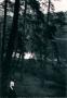 19xx-pechsee-verlag-grunewald-papeterie-koeningsallee-54