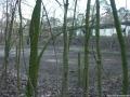 2007-02-03-cimg2753-klein