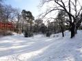 2016-01-18-dsc03387-gruener-teich-klein