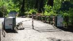 2015-05-13-schlachtensee-tage-vor-hundeverbot-051-klein