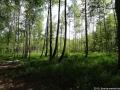 2012-06-29-posfenn-teufelsfenn-dsc-105-klein