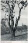 1950-schmook-nach-seite-16-grunewaldturm