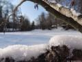 2012-02-03-halensee-65-klein