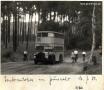 1950-07-16-bus-im-grunewald-klein