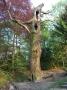 2009-04-16-cimg1128-klein
