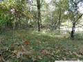 2011-10-09-dsc05979-klein