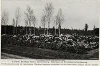 1913-die-gartenkunst-e-barth-karolingerplatz-005b-klein