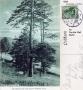 1909-lindwerder-lieper-bucht-klein