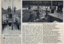 1909-iltis-im-grunewald-klein