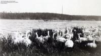 1893-04-schwanenlager-auf-pichelswerder-2-klein