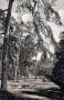 1918-ca-grunewald-bei-der-saubucht-klein