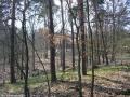 2009-april-04-filmaufnahmen-bilderbuch-grunewald_17-klein