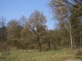 2009-april-04-filmaufnahmen-bilderbuch-grunewald_77-klein