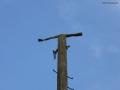 2006-07-20-cimg9541-klein