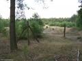 2006-07-20-cimg9546-klein