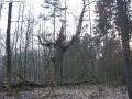 2007-02-24-cimg2889-klein