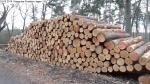 Waldpflege: Kiesgrube Postfenn - Baumfällungen März 2014