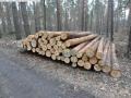 2014-03-18-langes-luch-baumfaellungen-038