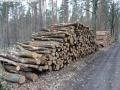 WaldPflege: Langes Luch - Baumfällungen März 2014