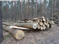 2014-03-18-langes-luch-baumfaellungen-051