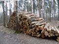 2014-03-18-langes-luch-baumfaellungen-053