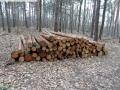 2014-03-18-langes-luch-baumfaellungen-055