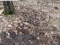 2014-03-18-langes-luch-baumfaellungen-011