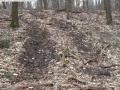 2014-03-18-langes-luch-baumfaellungen-021