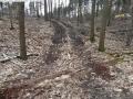 2014-03-18-langes-luch-baumfaellungen-022