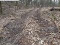 2014-03-18-langes-luch-baumfaellungen-023