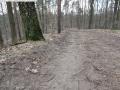 2014-03-18-langes-luch-baumfaellungen-028
