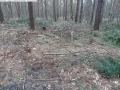 2014-03-18-langes-luch-baumfaellungen-039
