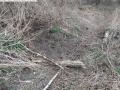 2014-03-18-langes-luch-baumfaellungen-062