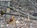 2014-03-18-langes-luch-baumfaellungen-066