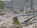 2014-03-18-langes-luch-baumfaellungen-068