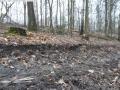 2014-03-18-langes-luch-baumfaellungen-075