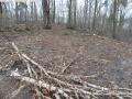 2014-03-18-langes-luch-baumfaellungen-091